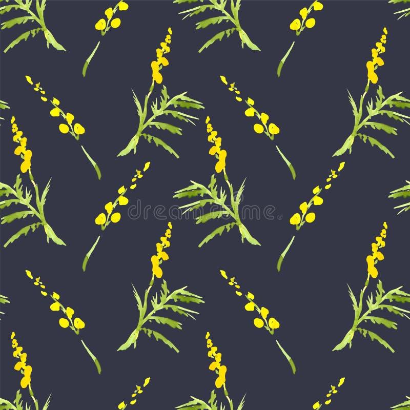 Mimosa de brin, fond d'aquarelle de ressort illustration stock