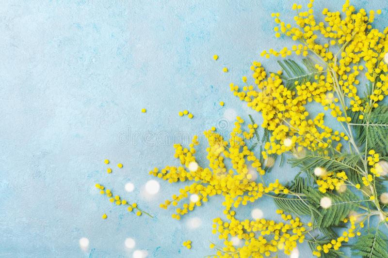 Mimosa flower on turquoise table top view. Spring card for Mothers day, 8 March or Easter. royalty free stock photography