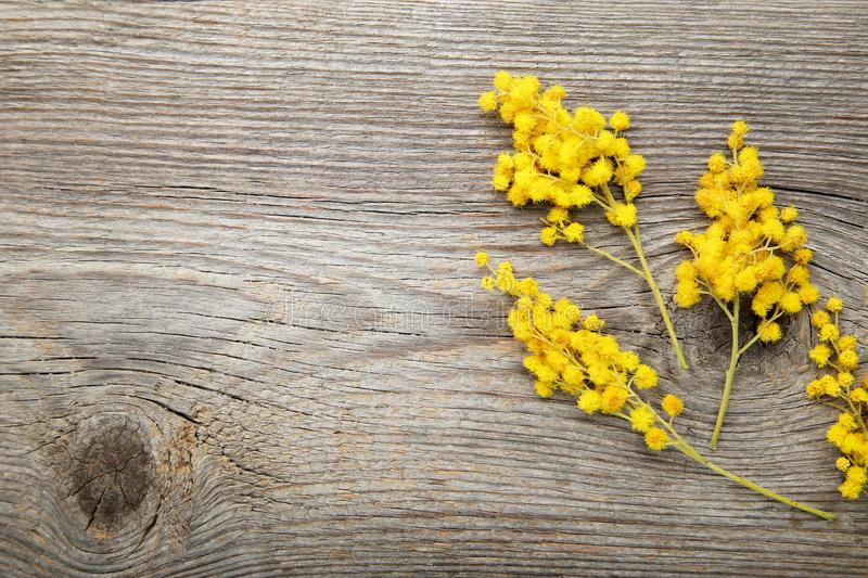 Mimosa flowers. On grey wooden table stock image