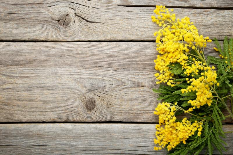 Mimosa flowers. On grey wooden table stock photography