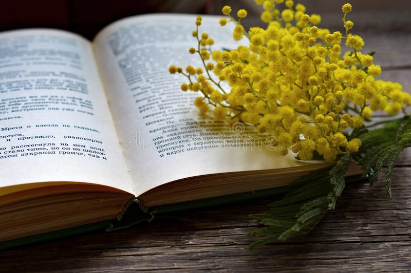 Mimosa. Flowers on interesting book royalty free stock photography