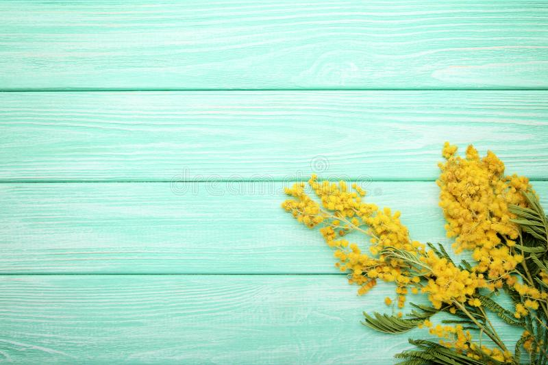 Mimosa flowers. On mint wooden table royalty free stock images