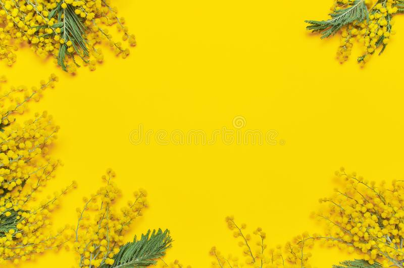 Mimosa flowers on yellow background top view flat lay copy space. Spring gentle composition, concept of spring season, symbol of 8 stock photos