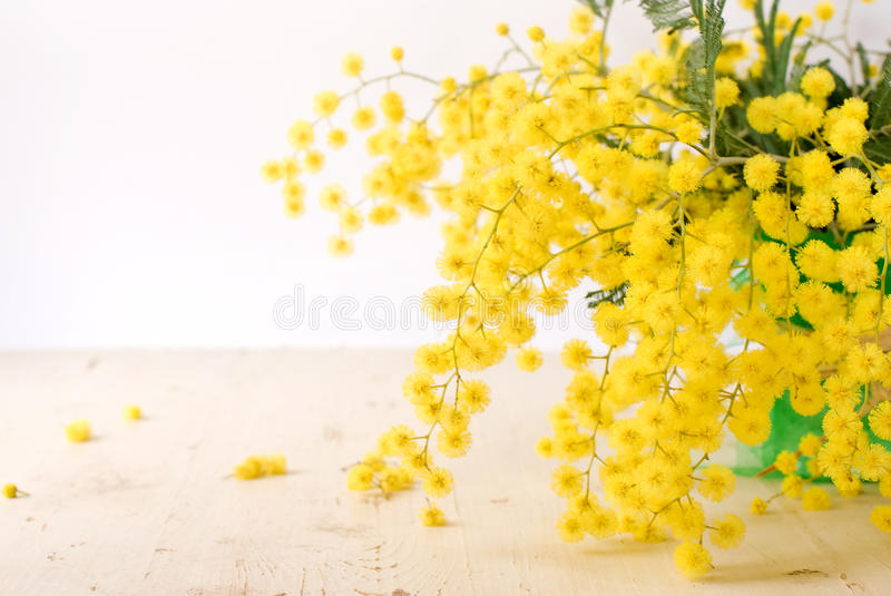 Mimosa for international women's day. Spring mimosa in the green vase royalty free stock image