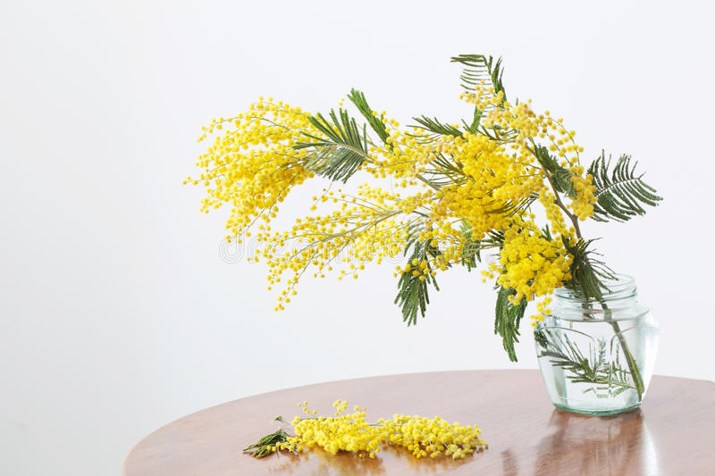 Mimosa in jar. On table royalty free stock photo