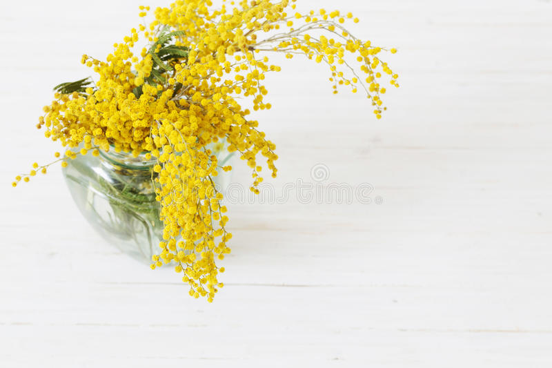 Mimosa in jar. On table stock image