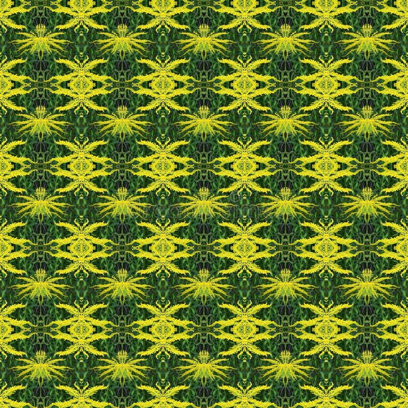 mimosa natural de la flor de la foto del modelo inconsútil colo de color verde amarillo imagen de archivo libre de regalías