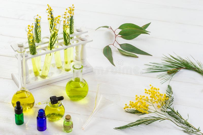 Mimosa, pijnboomboom, eucalyptus, in een laboratoriumglas, etherische oliefles, reageerbuizen op wit royalty-vrije stock fotografie