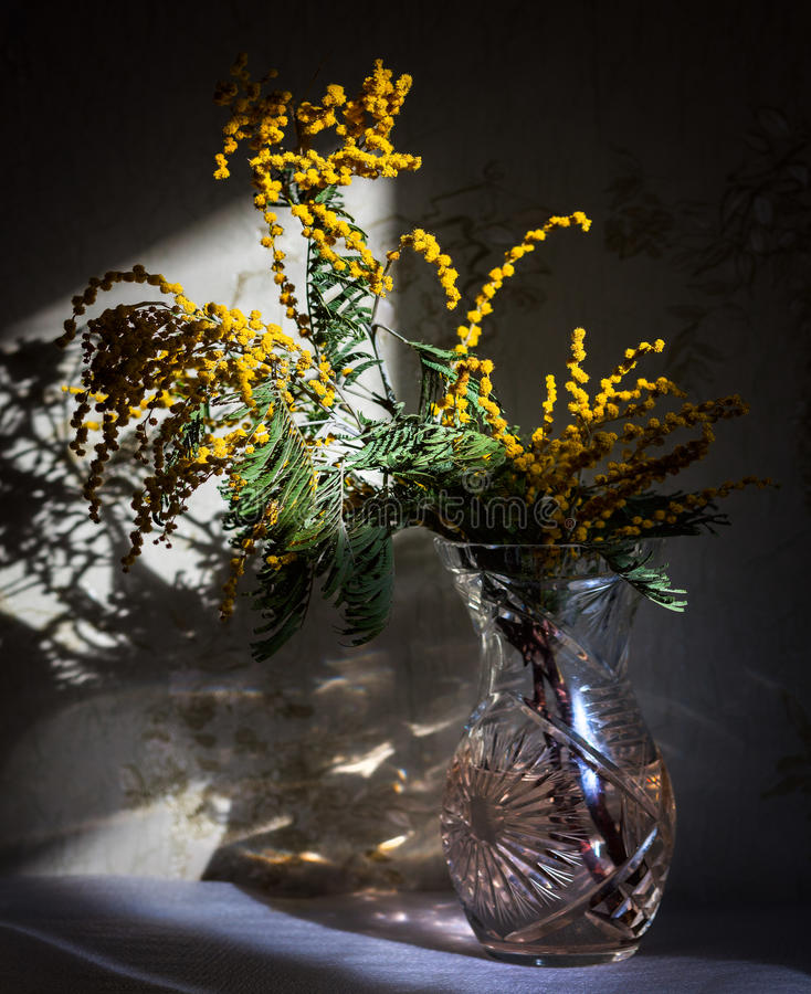 Mimosa pudica. Still life. Flowers of spring royalty free stock image
