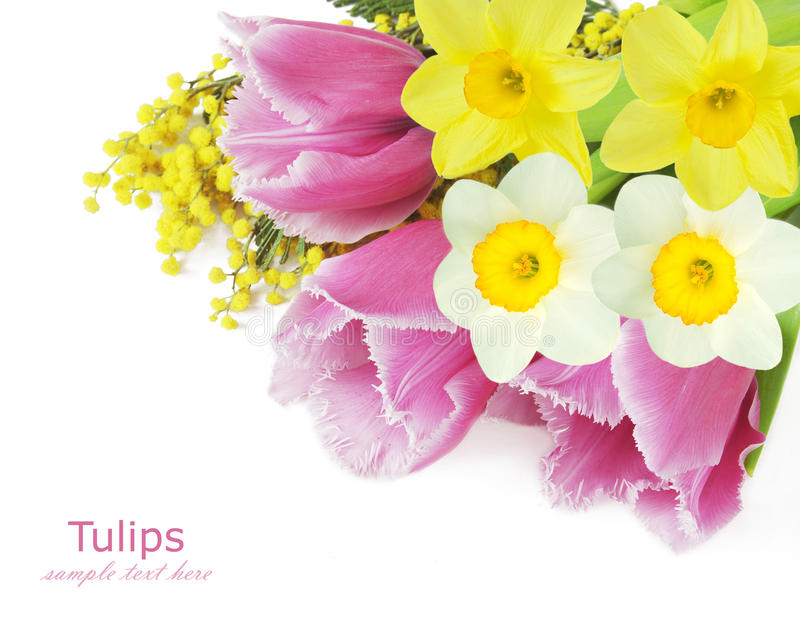 Mimosa,tulips and narcissus flowers royalty free stock image