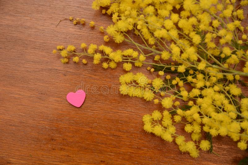 Mimosa yellow flower woman day 8th march nature on wood table. Mimosa yellow flower woman day 8th march nature wood table garden spring green leaf royalty free stock photos