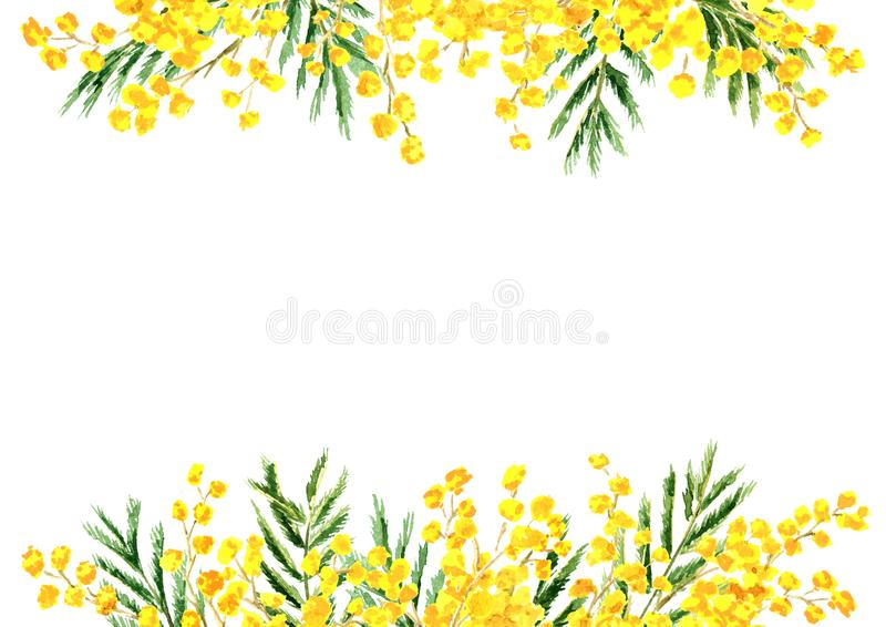 Mimosa yellow spring  flower border and frame. Watercolor hand drawn illustration isolated on white background.  vector illustration