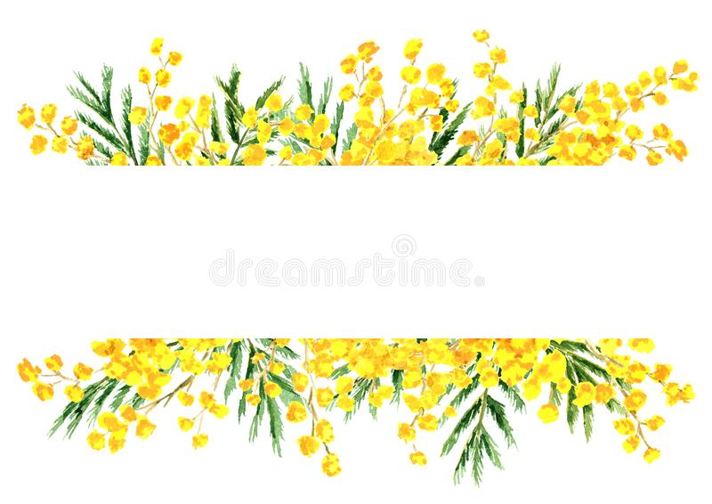 Mimosa yellow spring  flower border and frame, Watercolor hand drawn illustration isolated on white background.  stock illustration