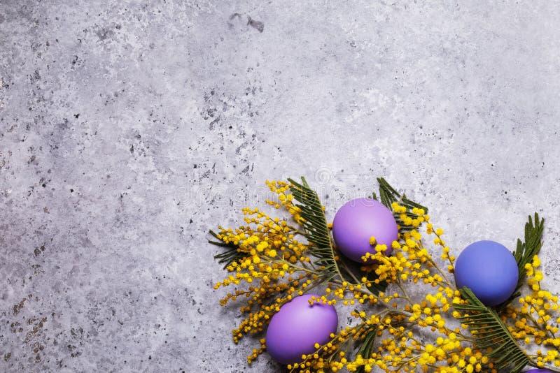 Mimosafilial och påskägg som dekoreras i olika färger med kopieringsutrymme arkivfoto