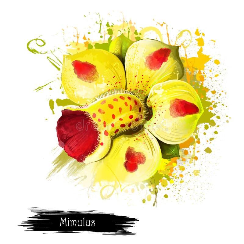 Mimulus Luteus o flor amarilla del mono stock de ilustración