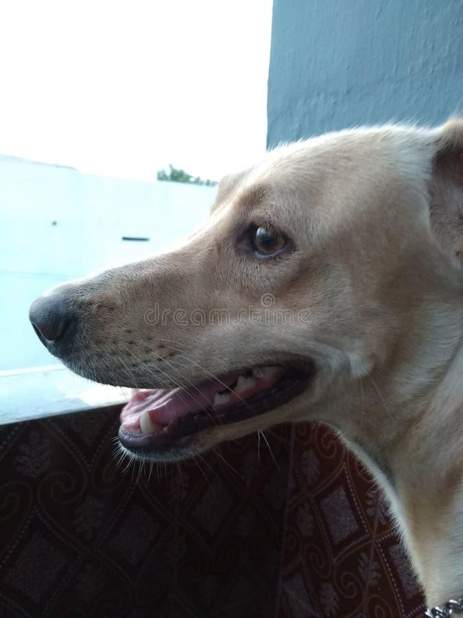 Min älsklings- hund royaltyfria bilder
