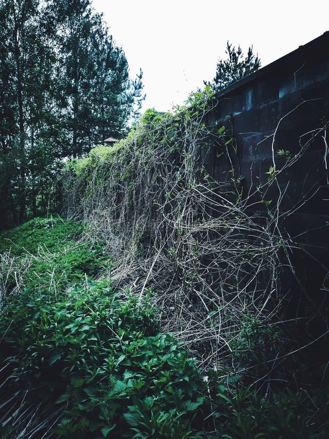 Min älskvärda växt arkivfoton