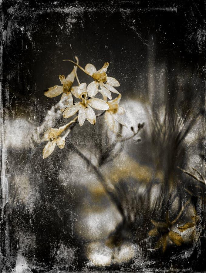 Min blommabakgrundshargita otto royaltyfri foto