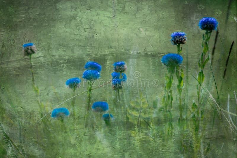 Min blommabakgrundshargita otto arkivbild