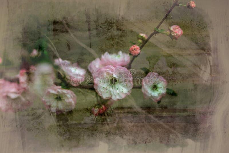 Min blommabakgrundshargita otto royaltyfria foton