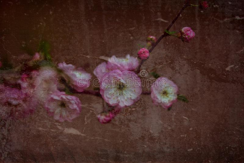 Min blommabakgrundshargita otto fotografering för bildbyråer