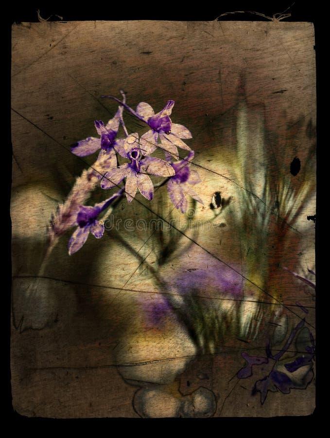 Min blommabakgrundshargita otto arkivfoton