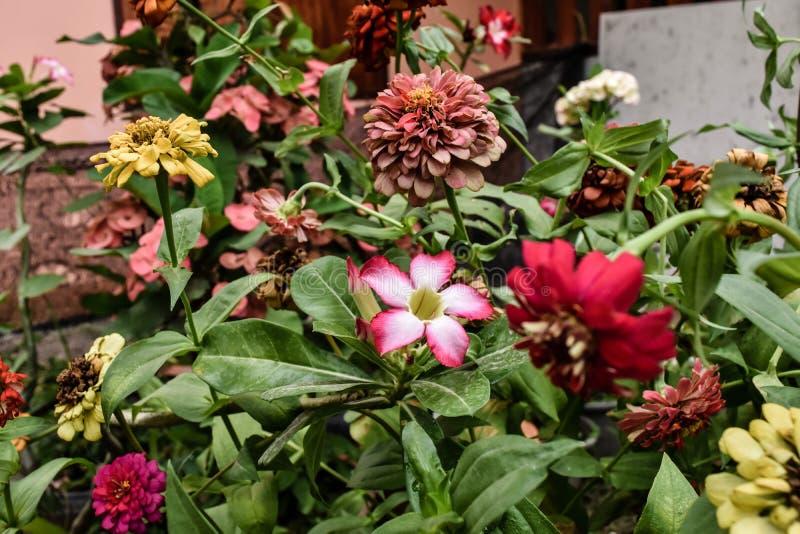 Min blommor royaltyfri foto
