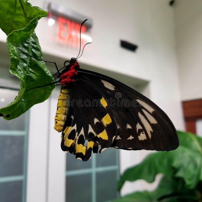 Min favorit- fjäril royaltyfria foton