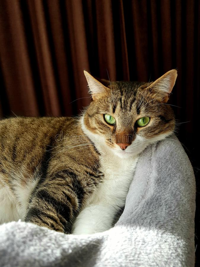 Min härliga katt royaltyfri fotografi