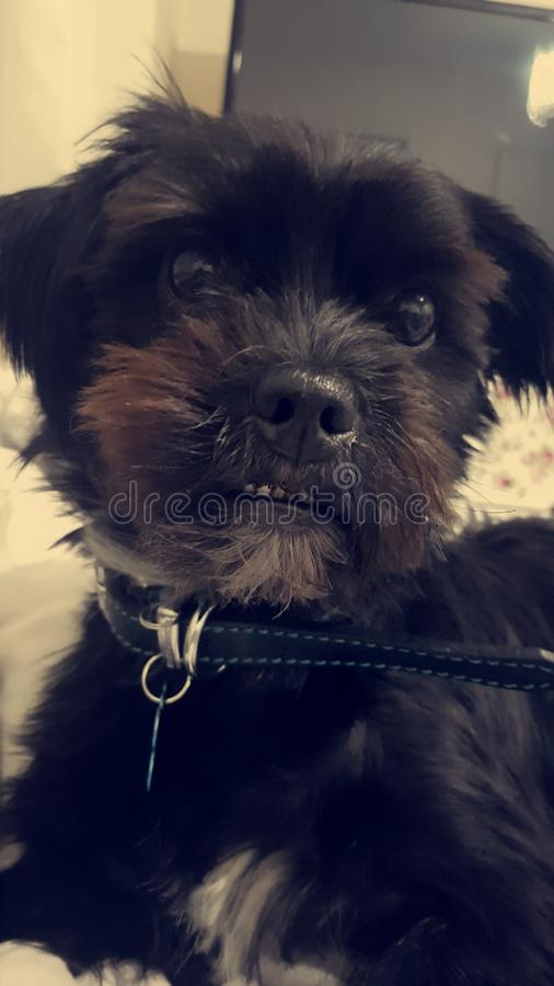 Min hund Billy royaltyfria bilder