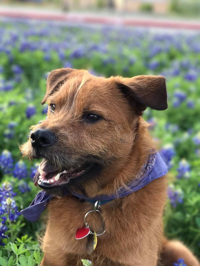 Min hund Linus arkivfoton