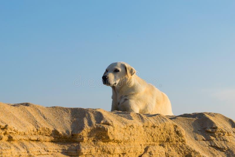 Min hund på stranden arkivbild