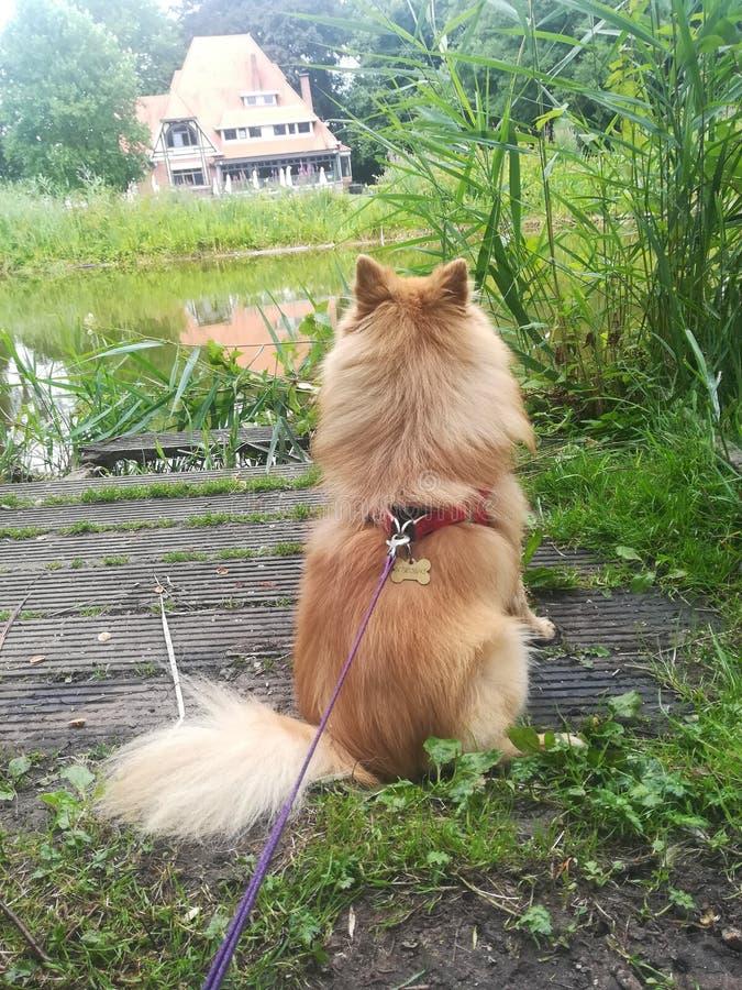 Min hund som håller ögonen på på andra sidan av sjön arkivbilder