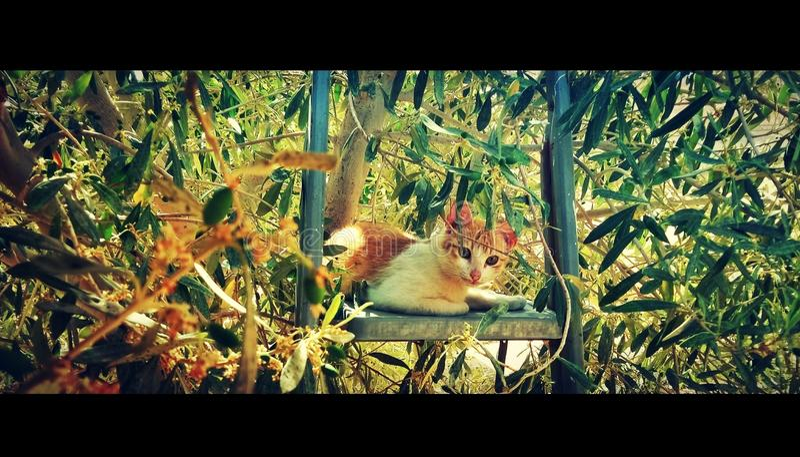min katt royaltyfria bilder