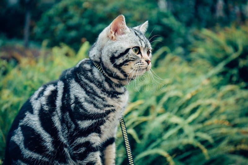 Min katt, Levi fotografering för bildbyråer