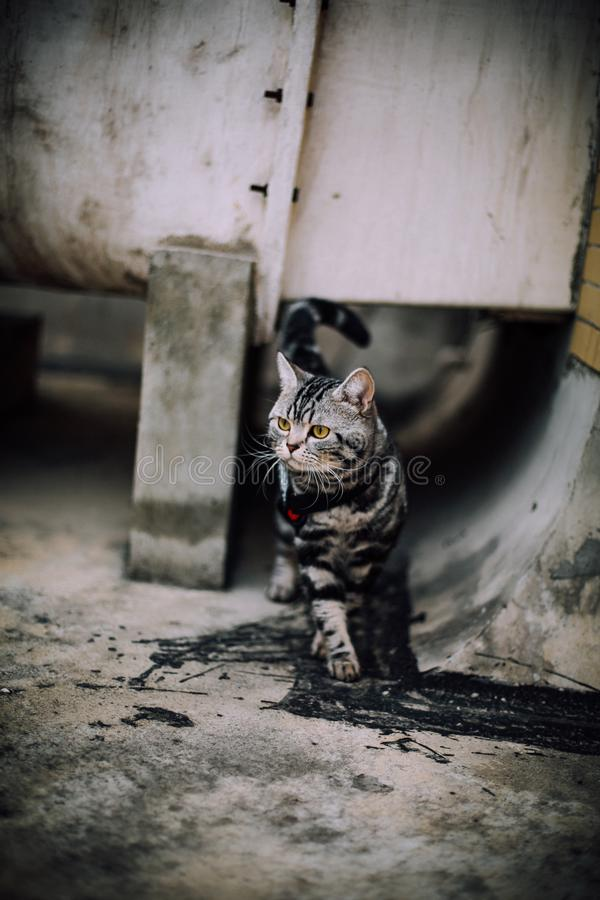 Min katt, Levi royaltyfri fotografi