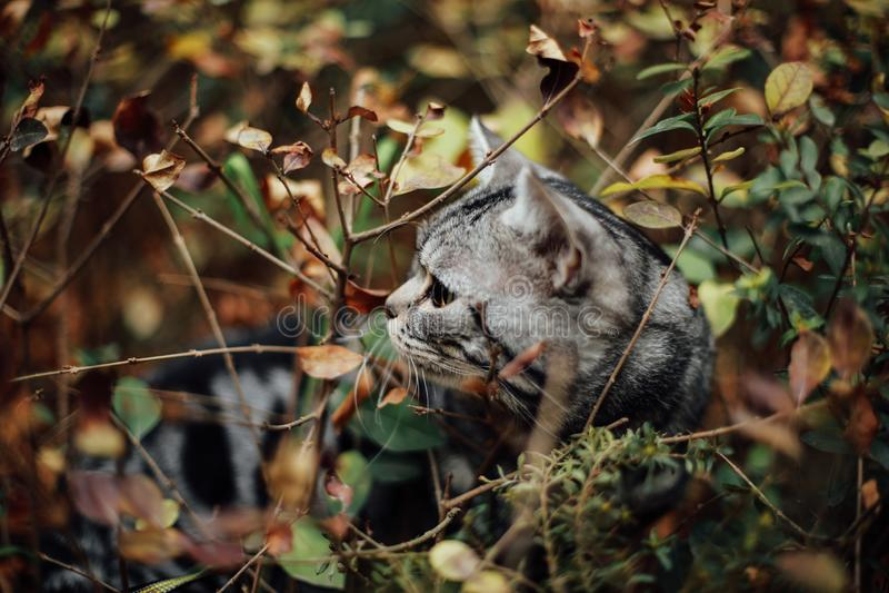 Min katt, Levi royaltyfri foto