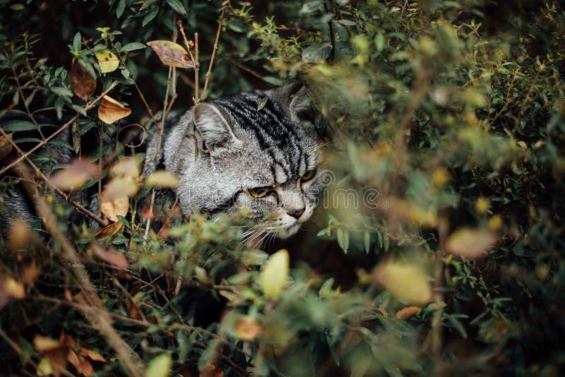Min katt, Levi arkivbilder