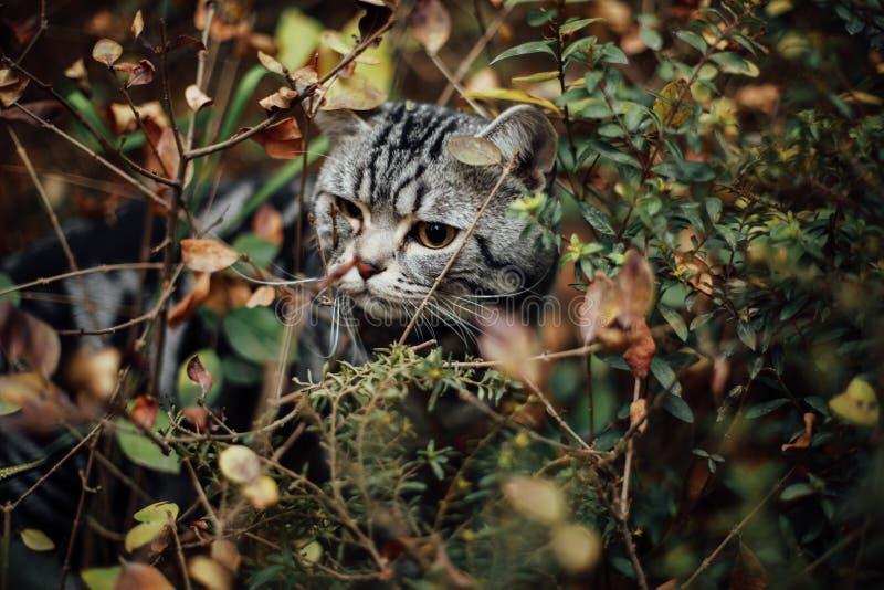 Min katt, Levi arkivfoton