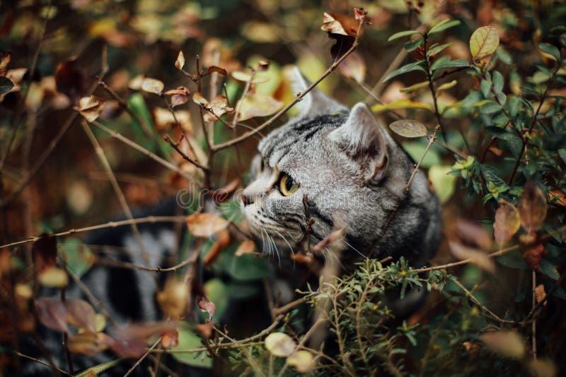 Min katt, Levi royaltyfria foton