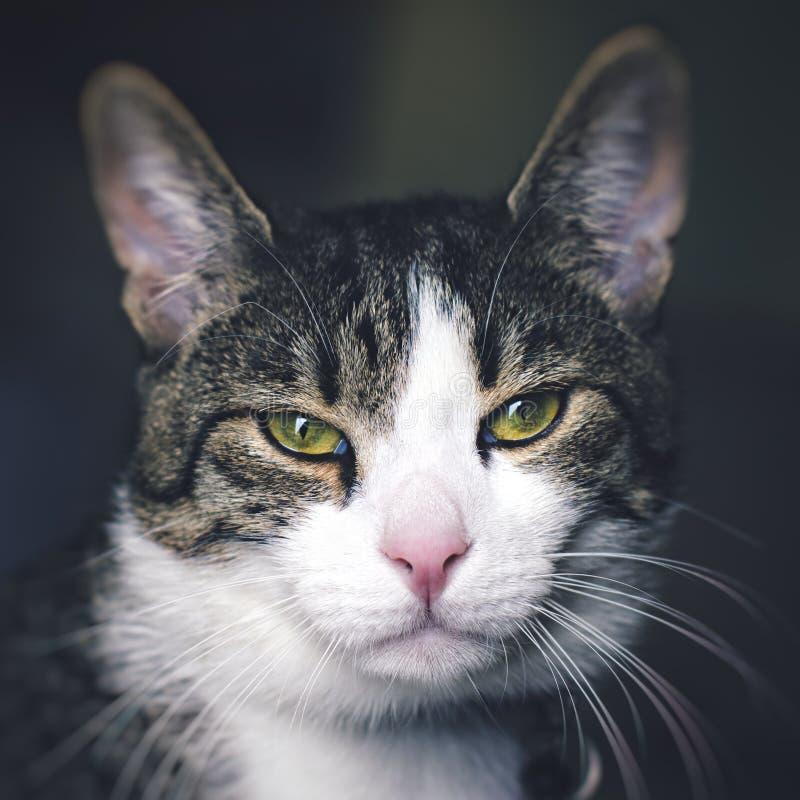 Min katt Majlo under mjukt utbrett ljus royaltyfria bilder