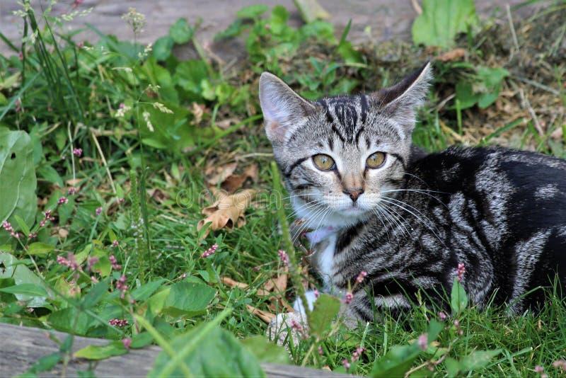 Min Kitten Exploring det fria arkivfoto