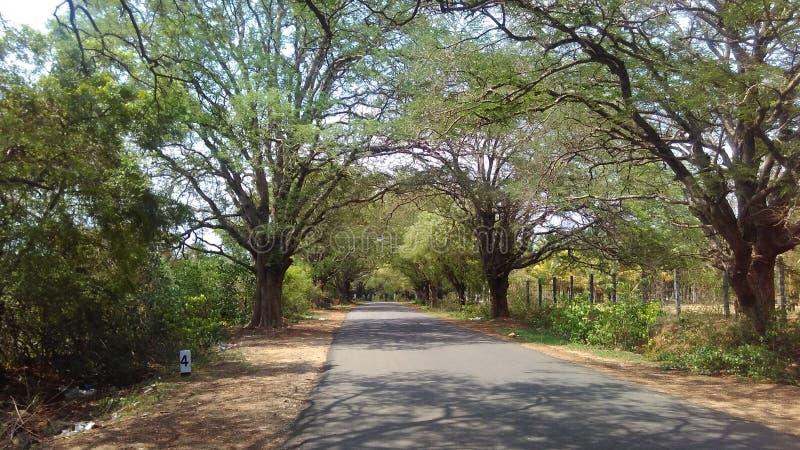 Min klick i Ramapattinam, Pollachi, Tamilnadu arkivbild