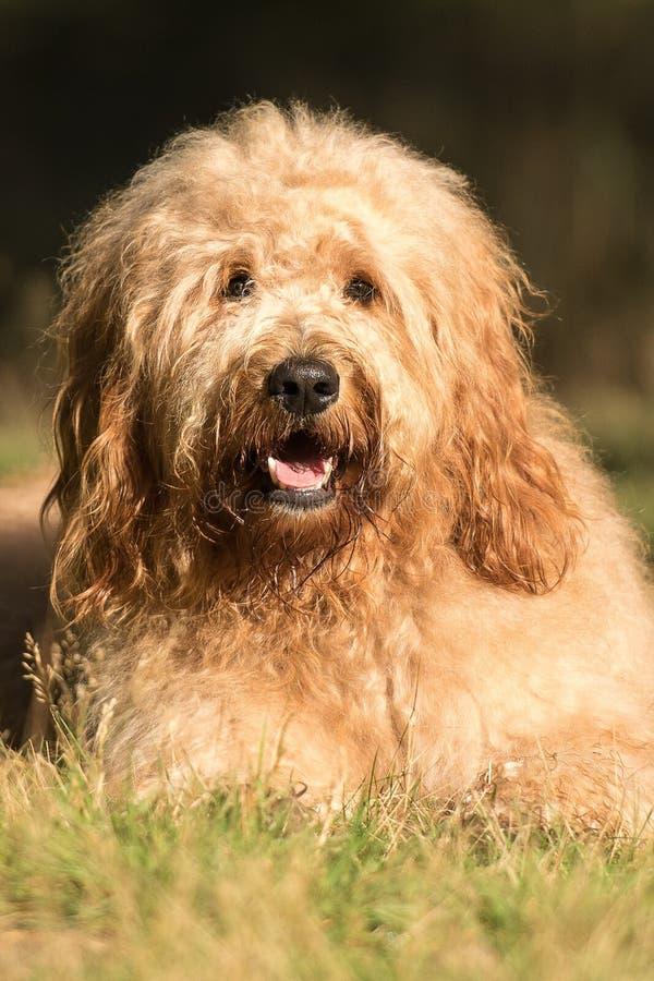 Min lilla hund royaltyfria foton