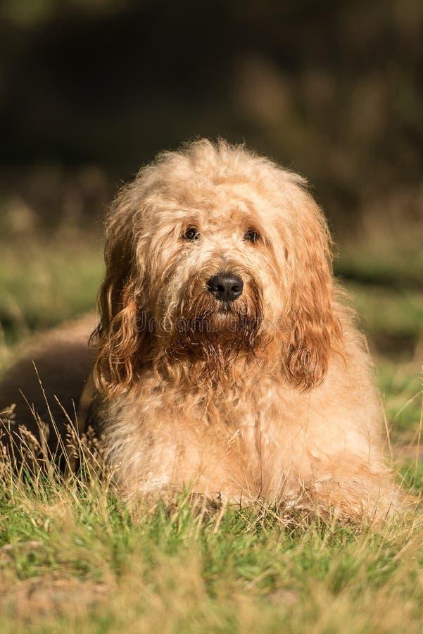 Min lilla hund arkivfoto