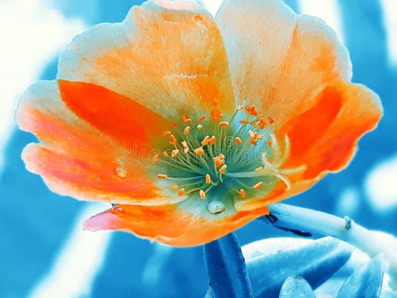 min trädgårds- blomma royaltyfri fotografi