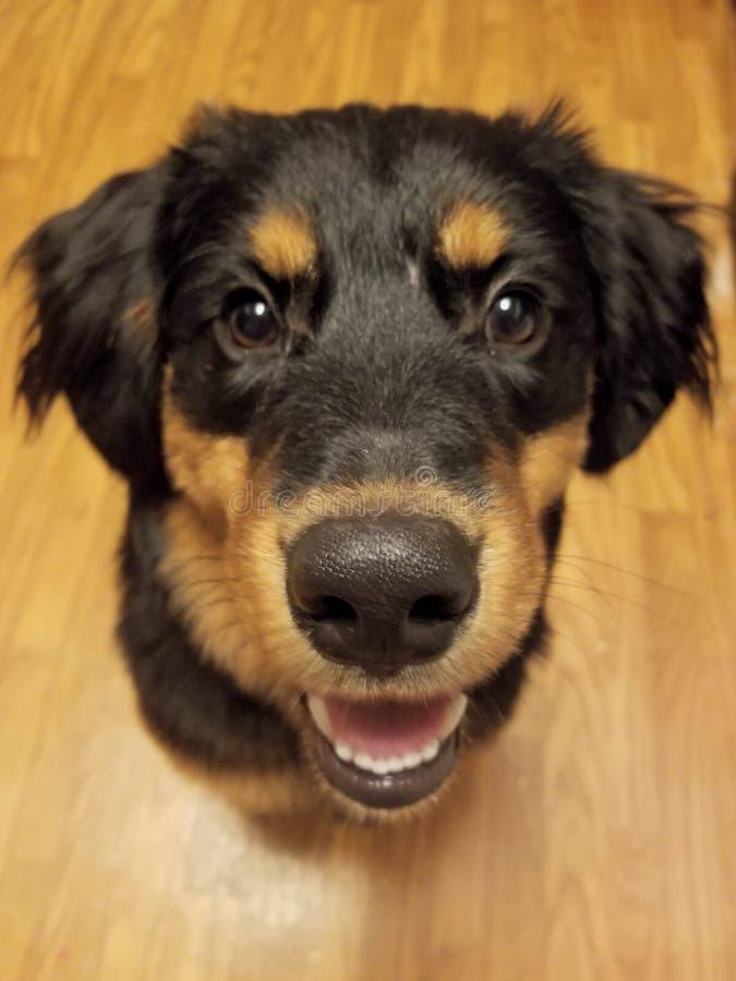 Min ursnygga hund fotografering för bildbyråer