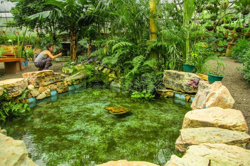 MINDO ECUADOR - AUGUSTI 27, 2017: Oidentifierat folk som tar bilder av ett härligt damm som lokaliseras i Mindo rekreation royaltyfri fotografi