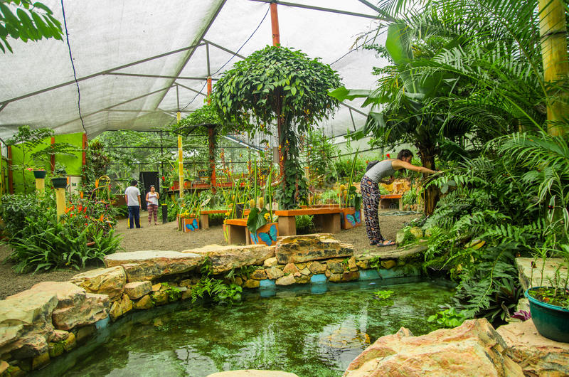 MINDO ECUADOR - AUGUSTI 27, 2017: Oidentifierat folk som tar bilder och tycker om växterna inom av ett växthus royaltyfri fotografi