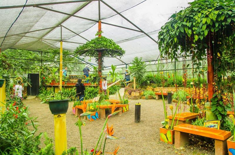 MINDO ECUADOR - AUGUSTI 27, 2017: Oidentifierat folk som tar bilder och tycker om växterna inom av ett växthus arkivfoto